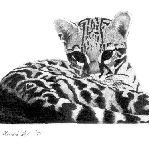 Diego the Ocelot